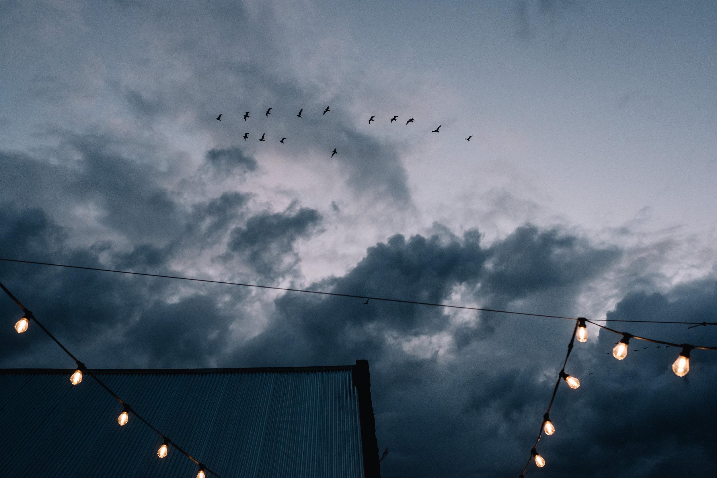 Birds + festoon lighting