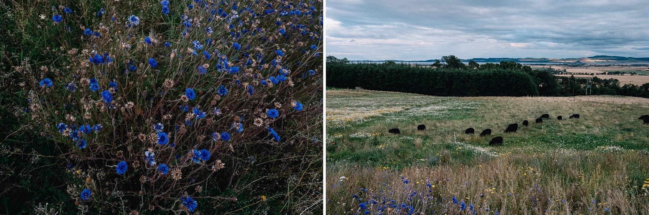 02-Guardswell-farm-perthshire-hills-harper-scott-photo-3.jpg