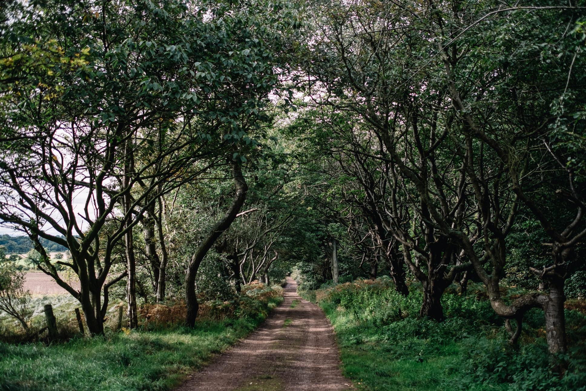 Forrest drive way up to Ravensheugh Log Cabin.