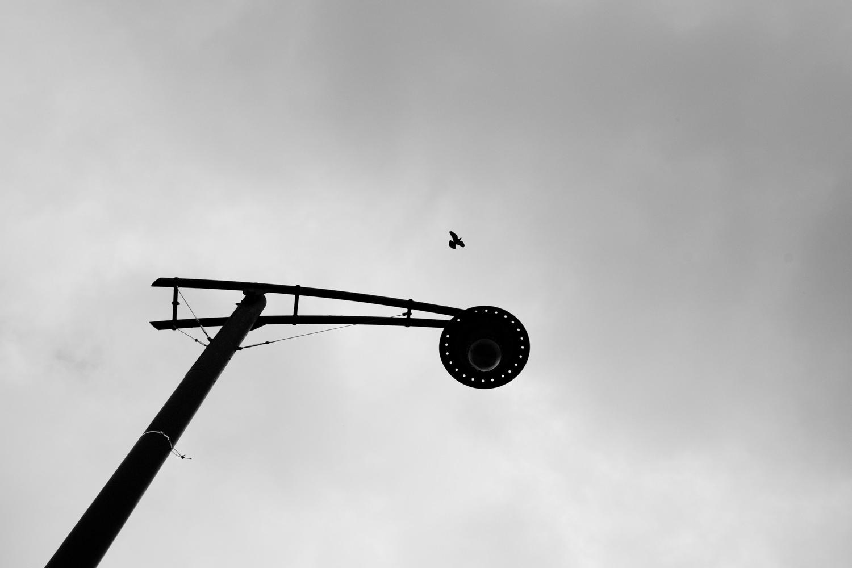 A bird flies past a street lamp in Glasgow city cetnre
