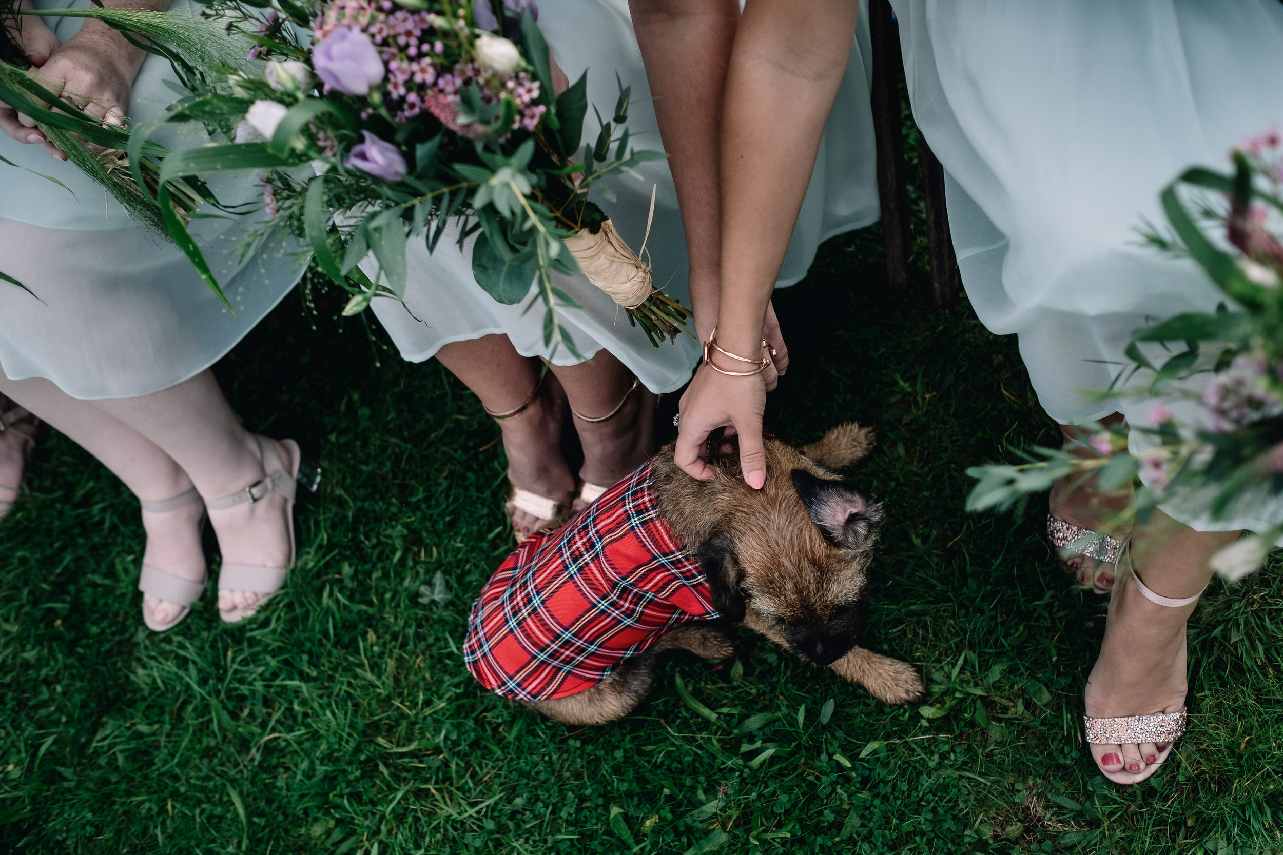 011-alternative-wedding-photographer-dog.jpg