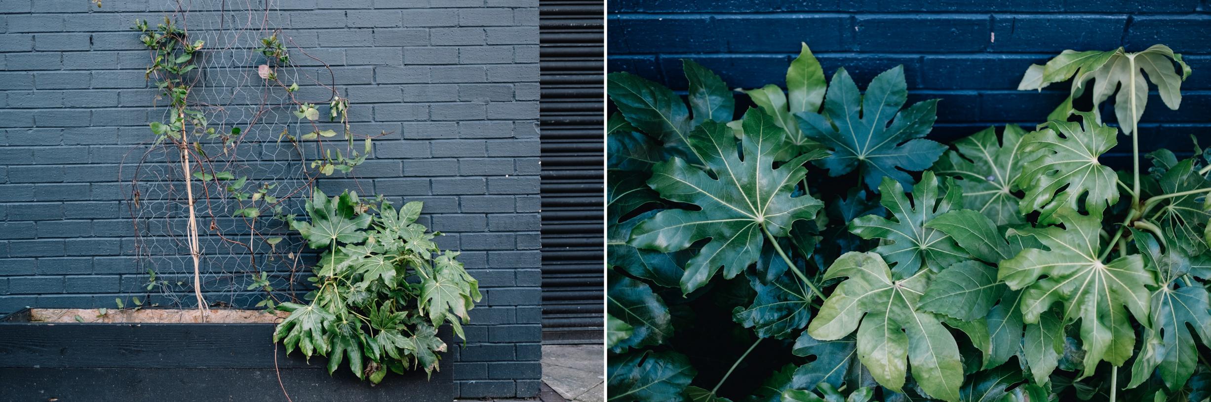 11-BaAD-Glasgow-plants.jpg