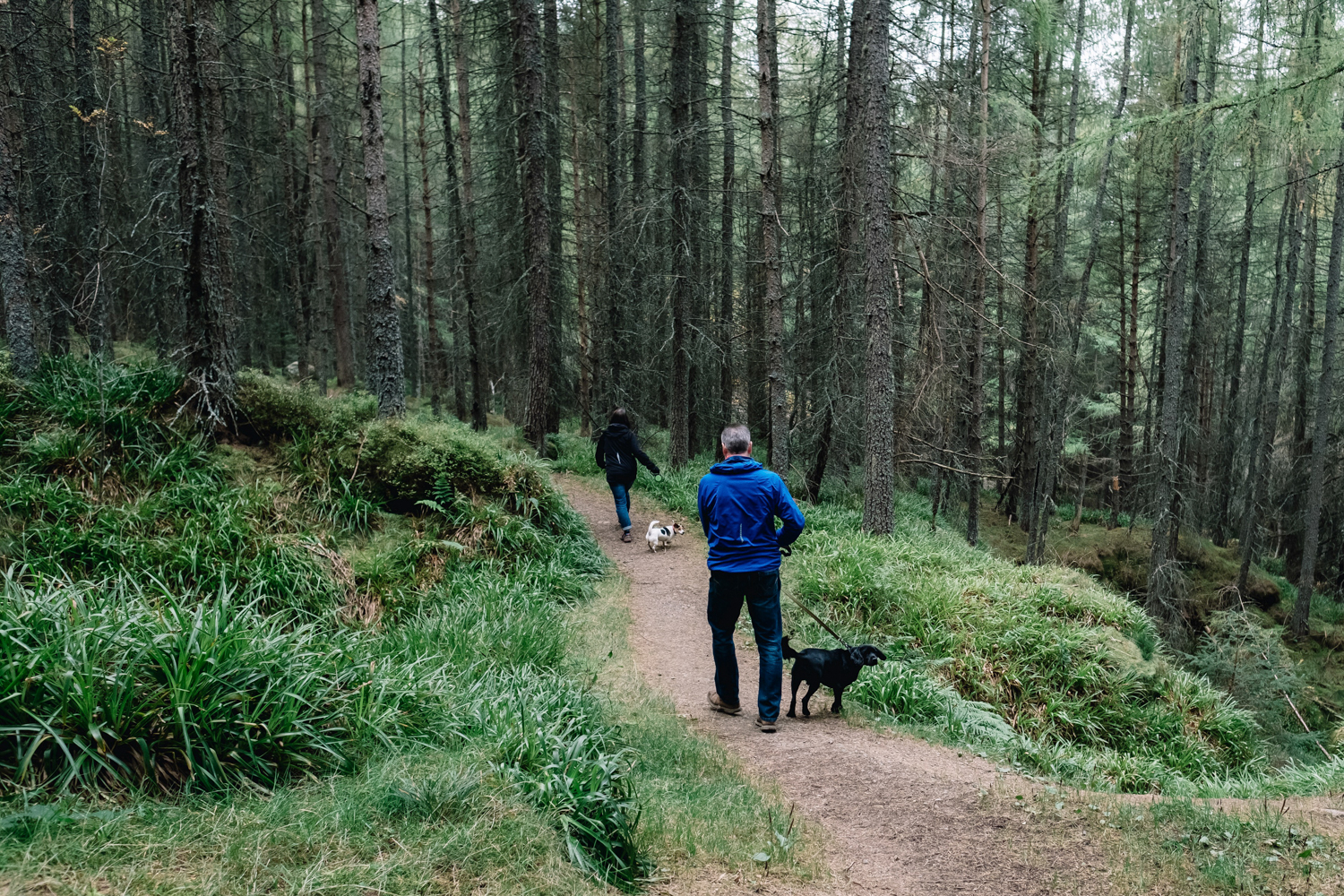 Two dog walkers out in a woodland area.