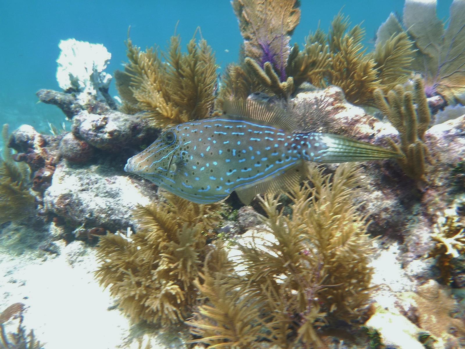 NiceScrawledFilefish.jpeg