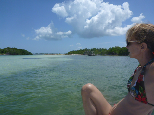 Explore the shallows