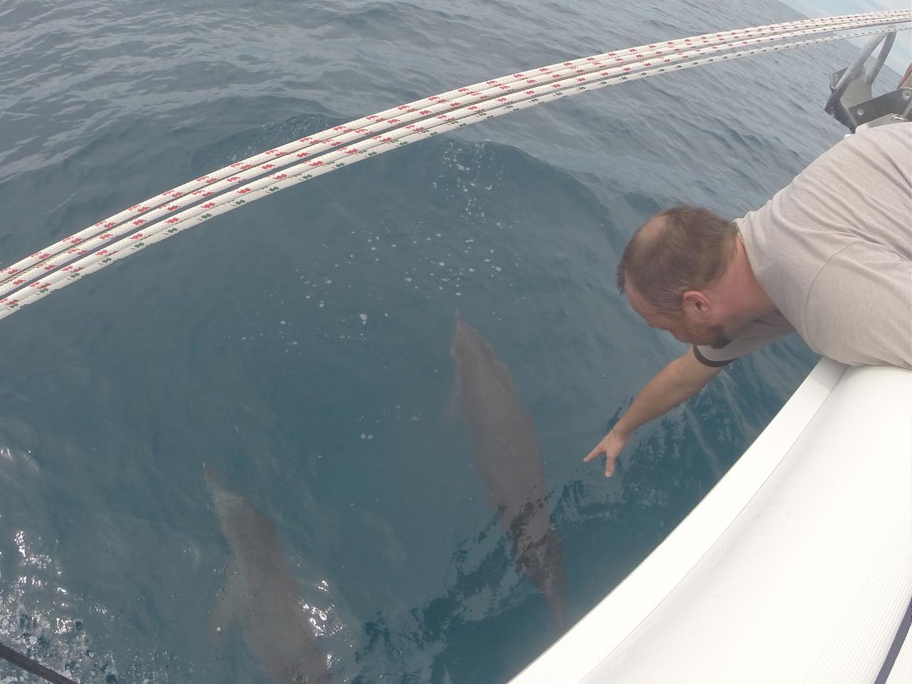 Reach for dolphins.JPG