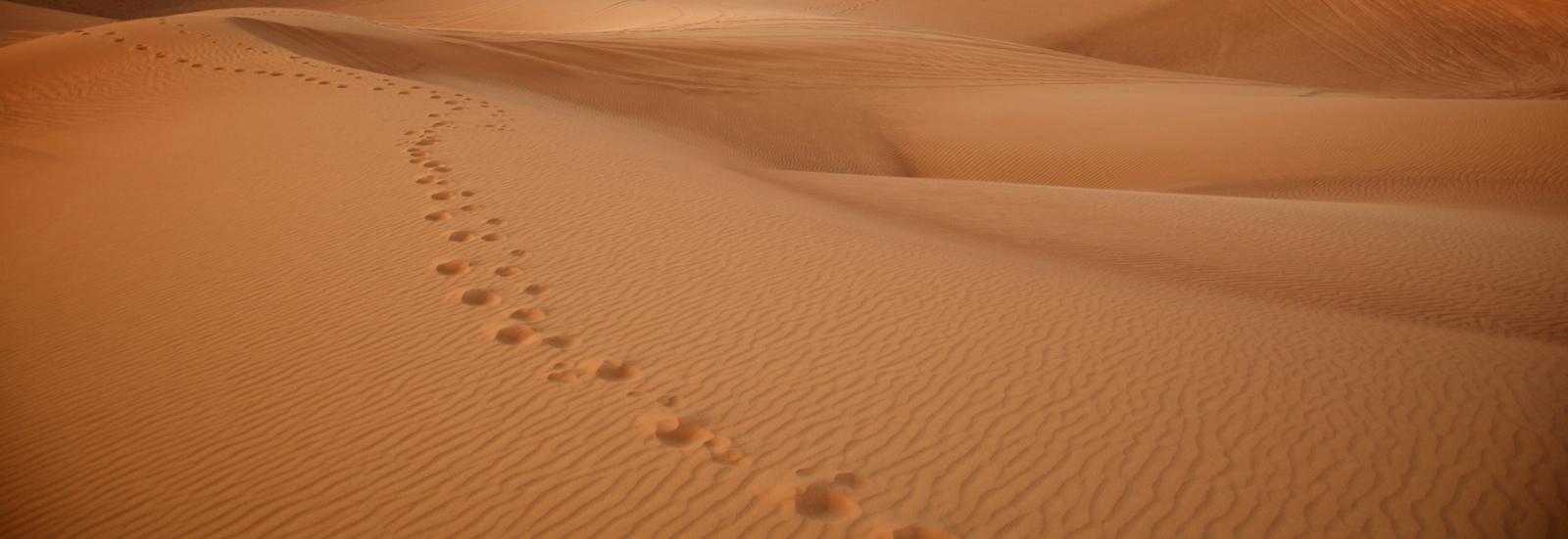 UAE 140.jpg