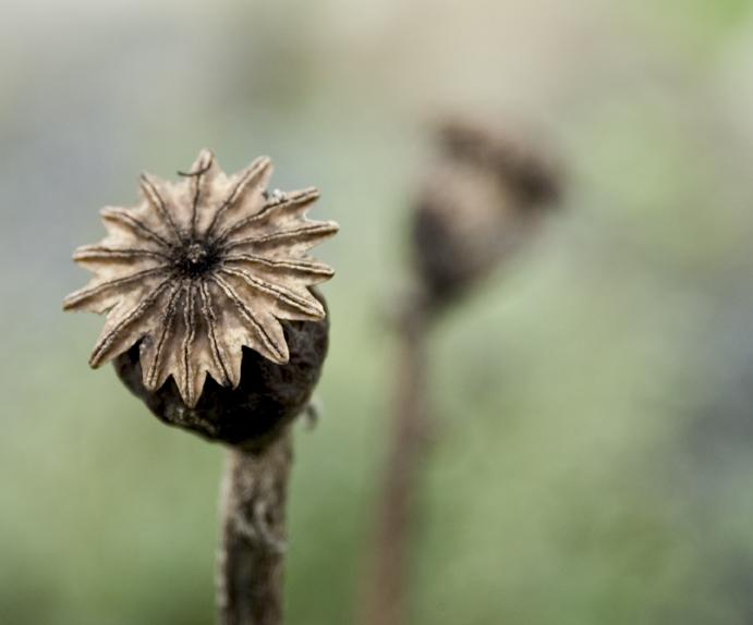 killeengraveflower.jpg