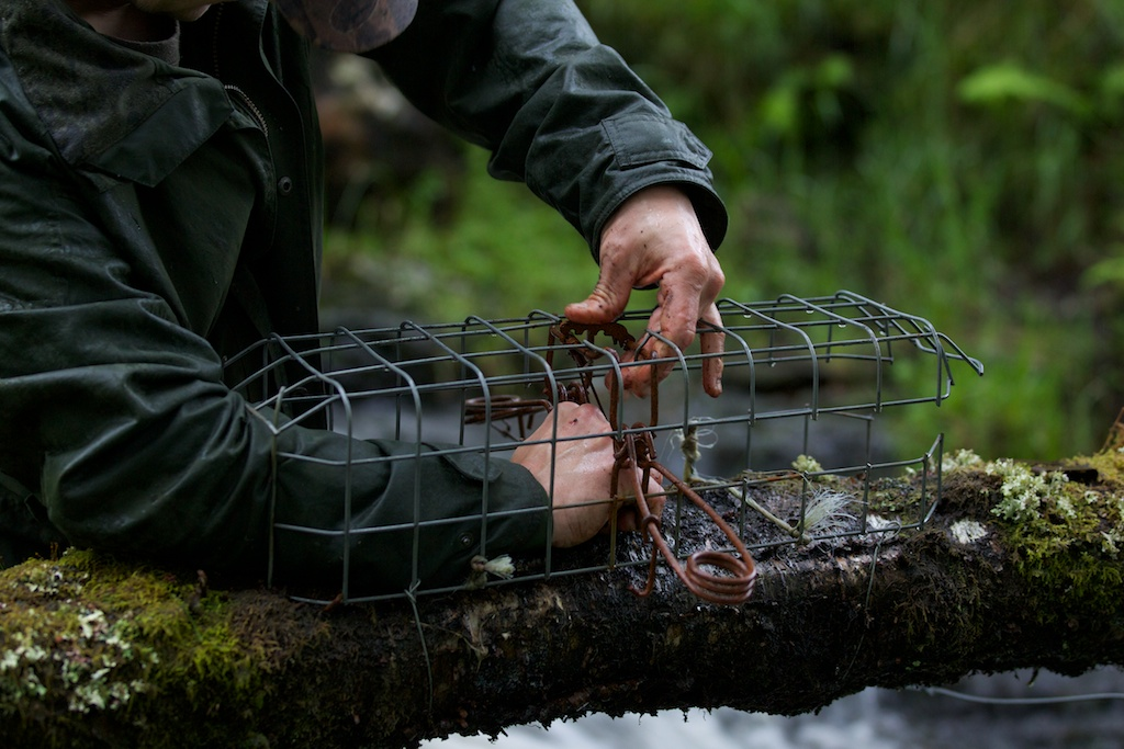 Mark setting a double magnum trap. This is only legal if in the cage - stopping any non-target species (like the protected pine marten) in.