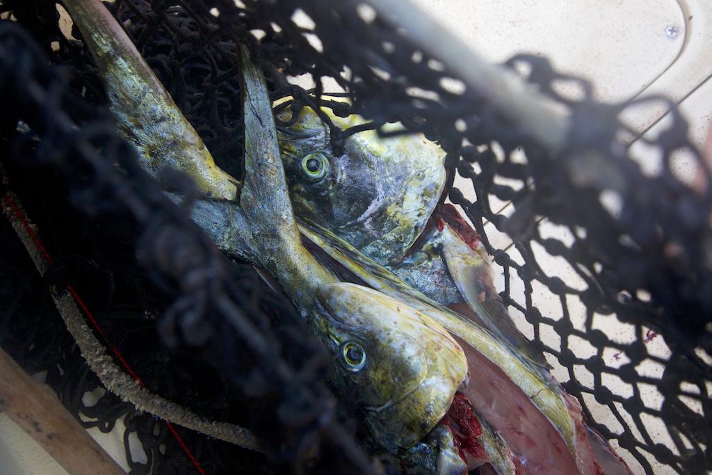 Lamu, Fishing and Development