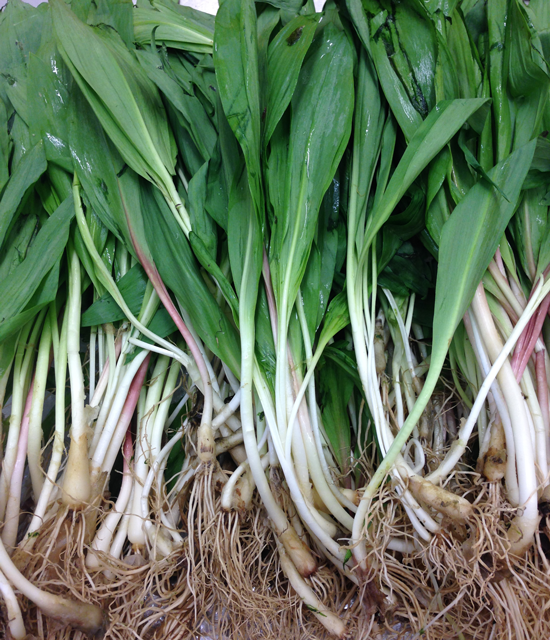 The Ramp, (aka wild leeks) are popping up now at your local farmers markets. Grab 'em while they last.