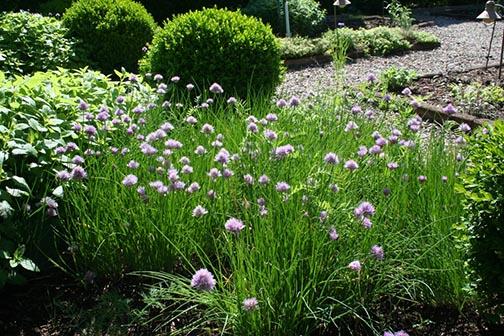 Bernards-garden1.jpg