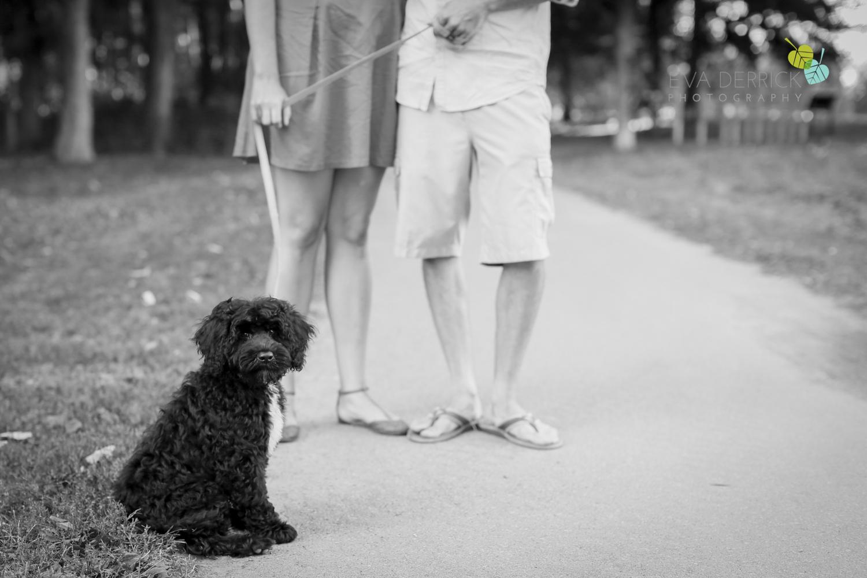 niagara-wedding-niagara-engagement-photographer-puppy-porteguse-water-dog-engagement-session-love-portraits-niagara-on-the-lake-black-and-white-photo.jpg