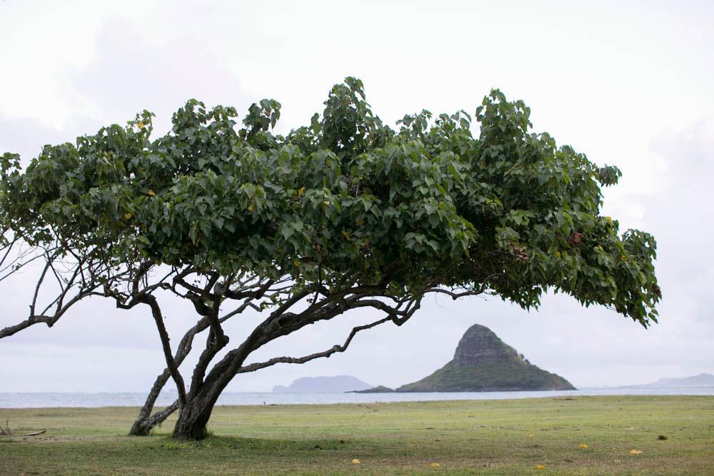 Oahu, Hawaii - Private Estate