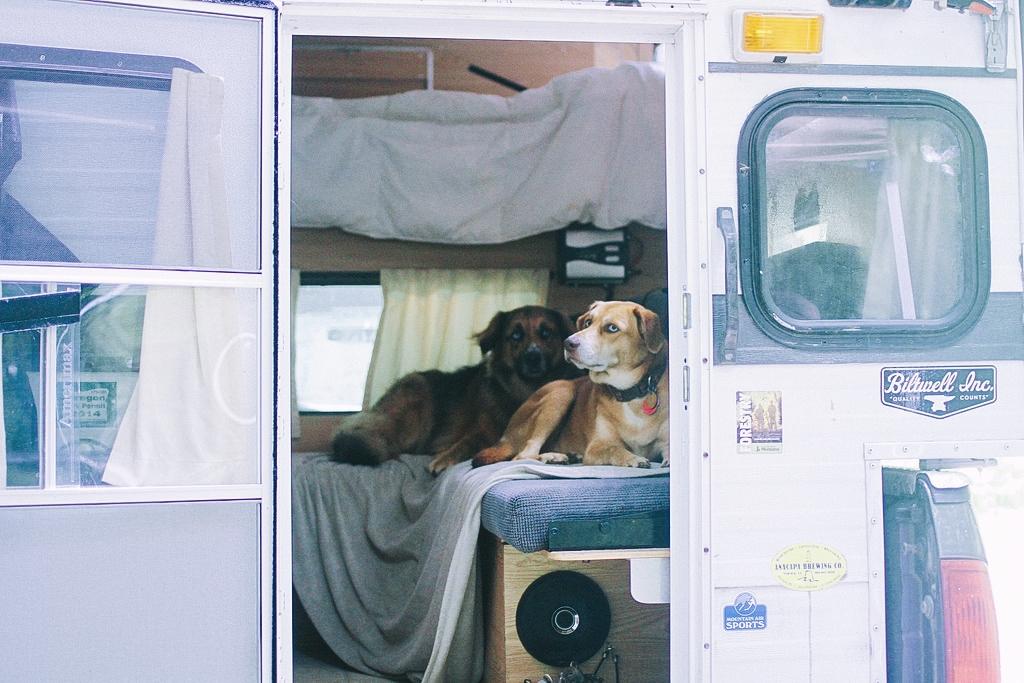 Fitz and Malta in new camper