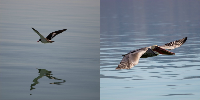 birds 4.jpg