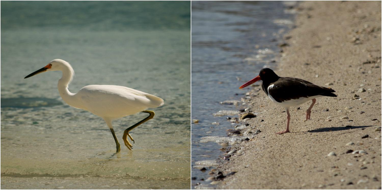 birds 3.jpg
