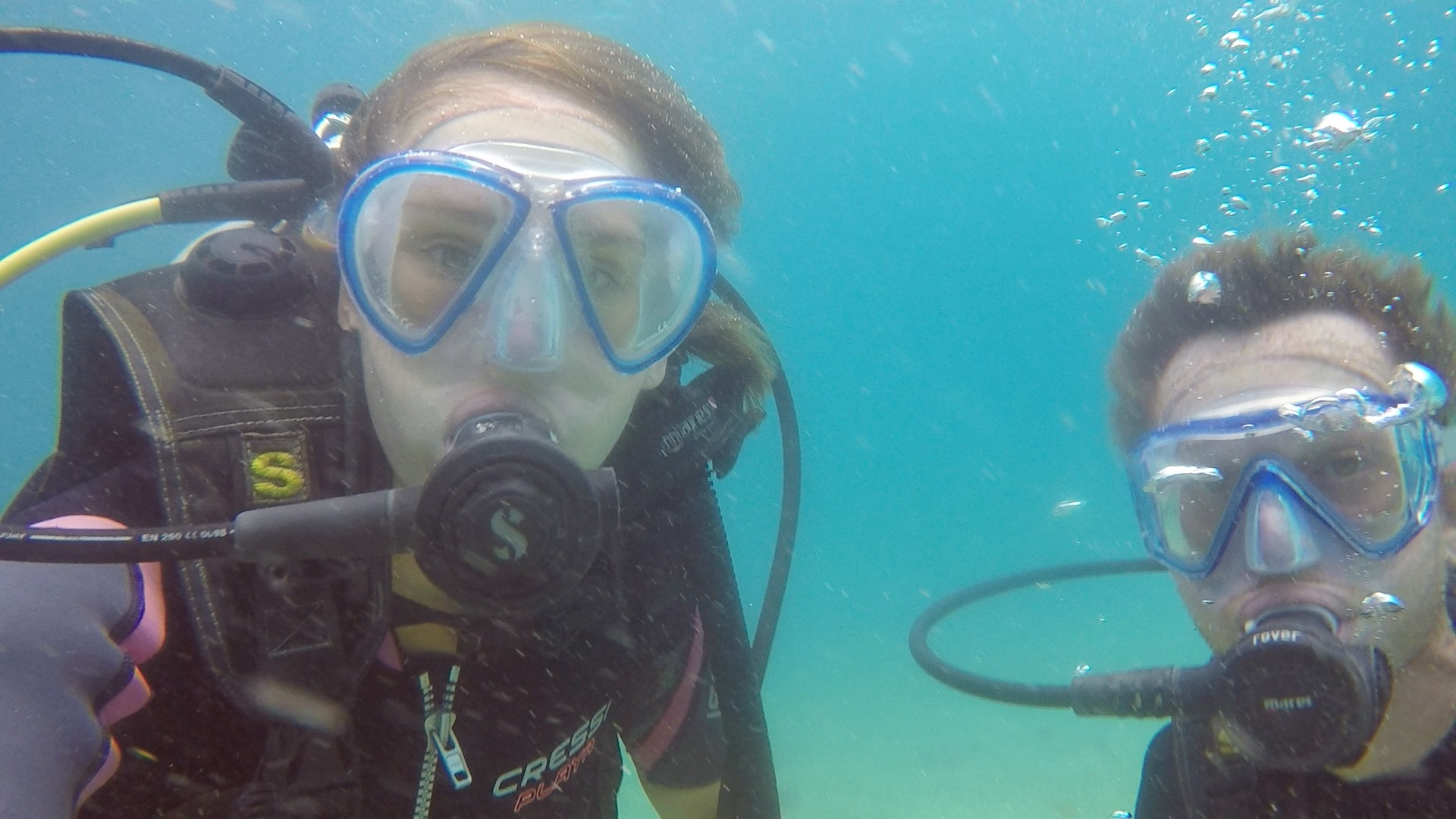 Diving with  Frenchies