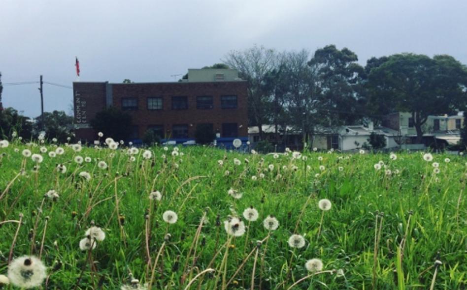 Dandelion, photo took in Redfern, NSW