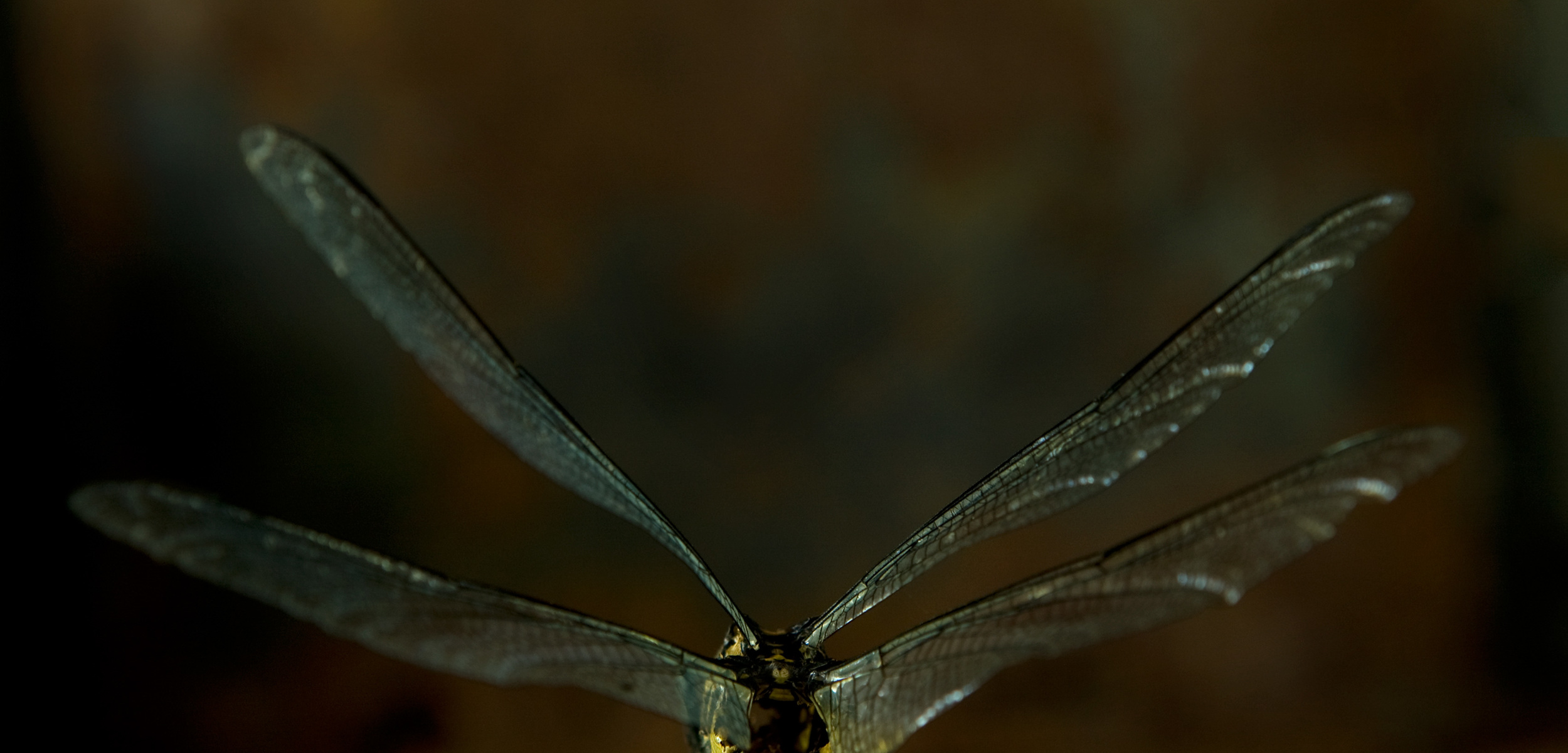 dragonfly.wabisabi.jpg