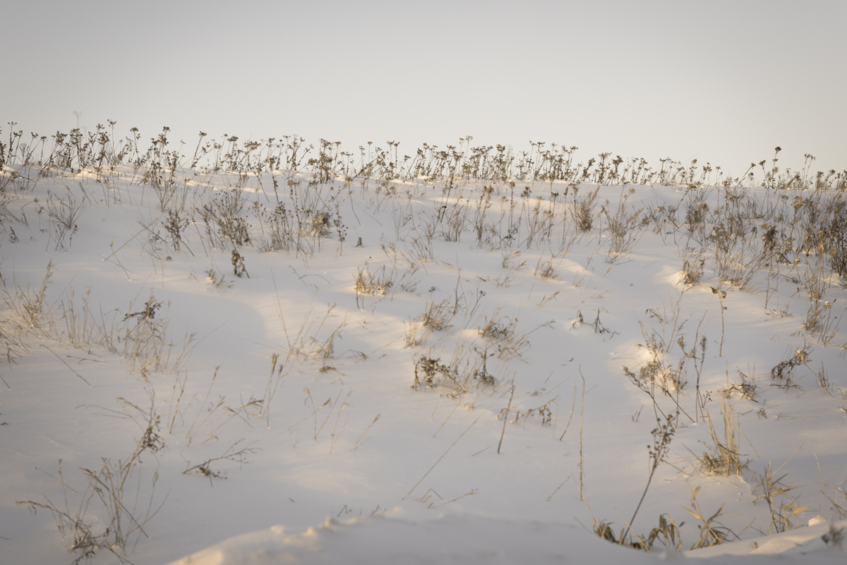 Prairie-9745.jpg