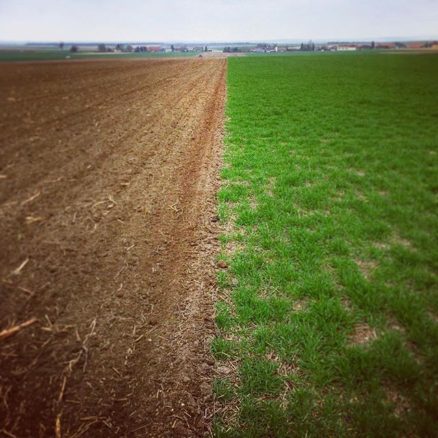 Fifty-fifty ! #field #nature #shooting #digitalphotography #green #agriculture #farm