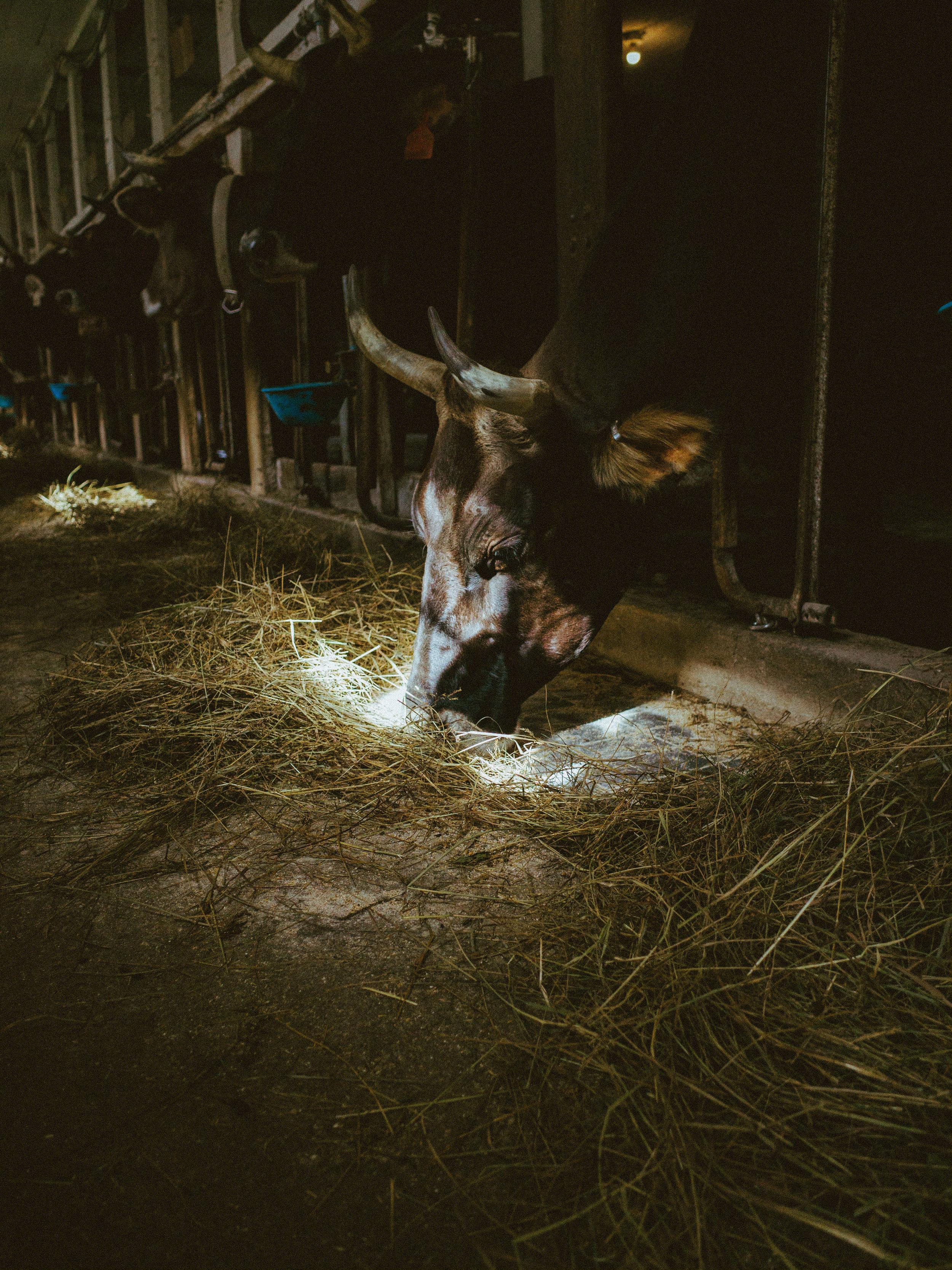 hudson-farm-PICK-2017-321090.jpg