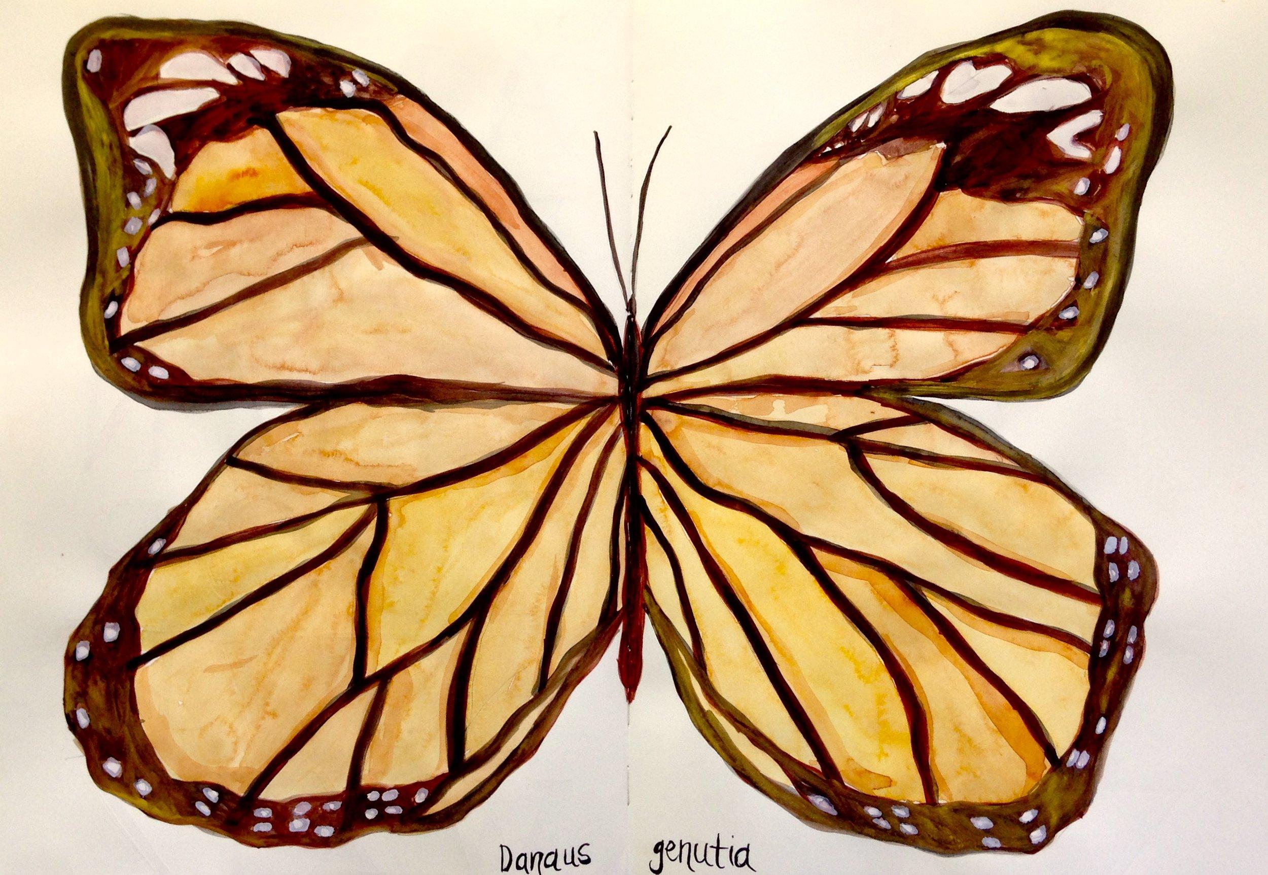 Danaus Genutia, 2017  watercolor on paper