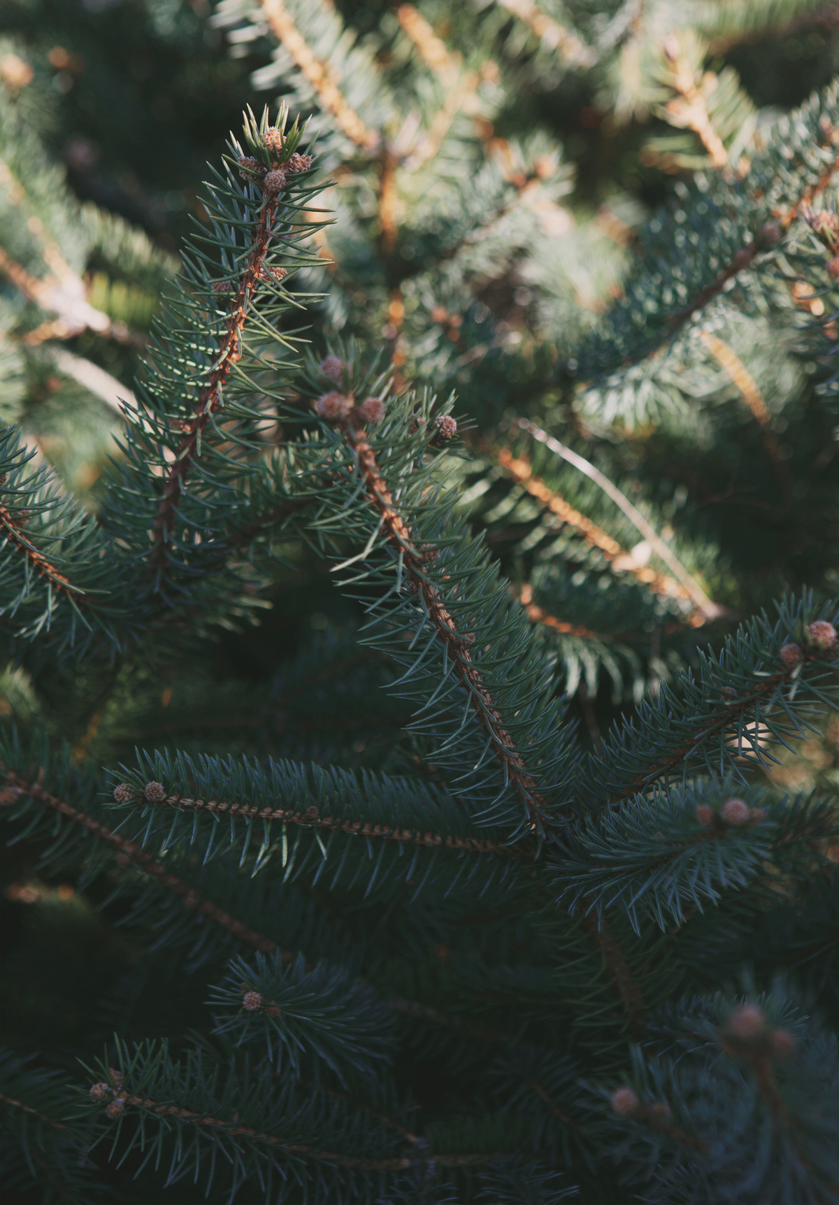 christmas-tree-hunting_08.jpg