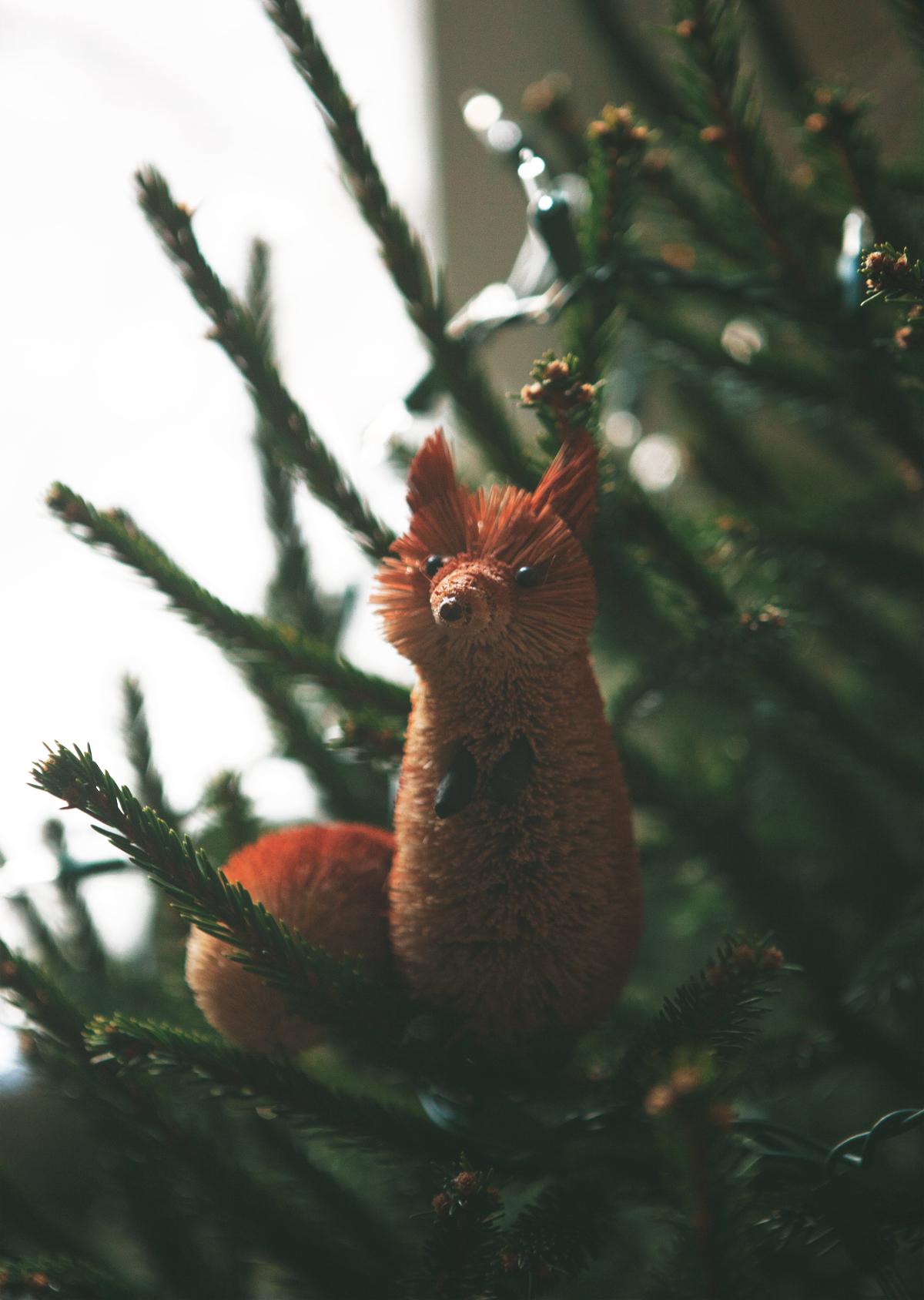 Christmas-Tree-Hunting_0326.jpg