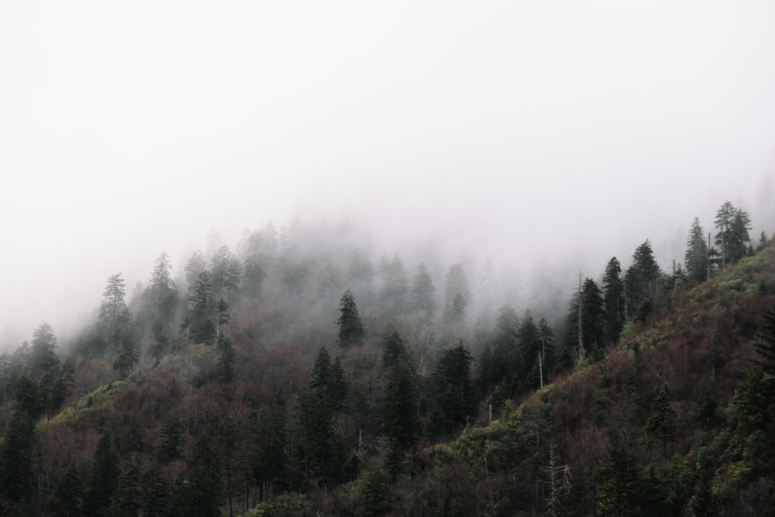 Great Smoky Mountains-0006.jpg
