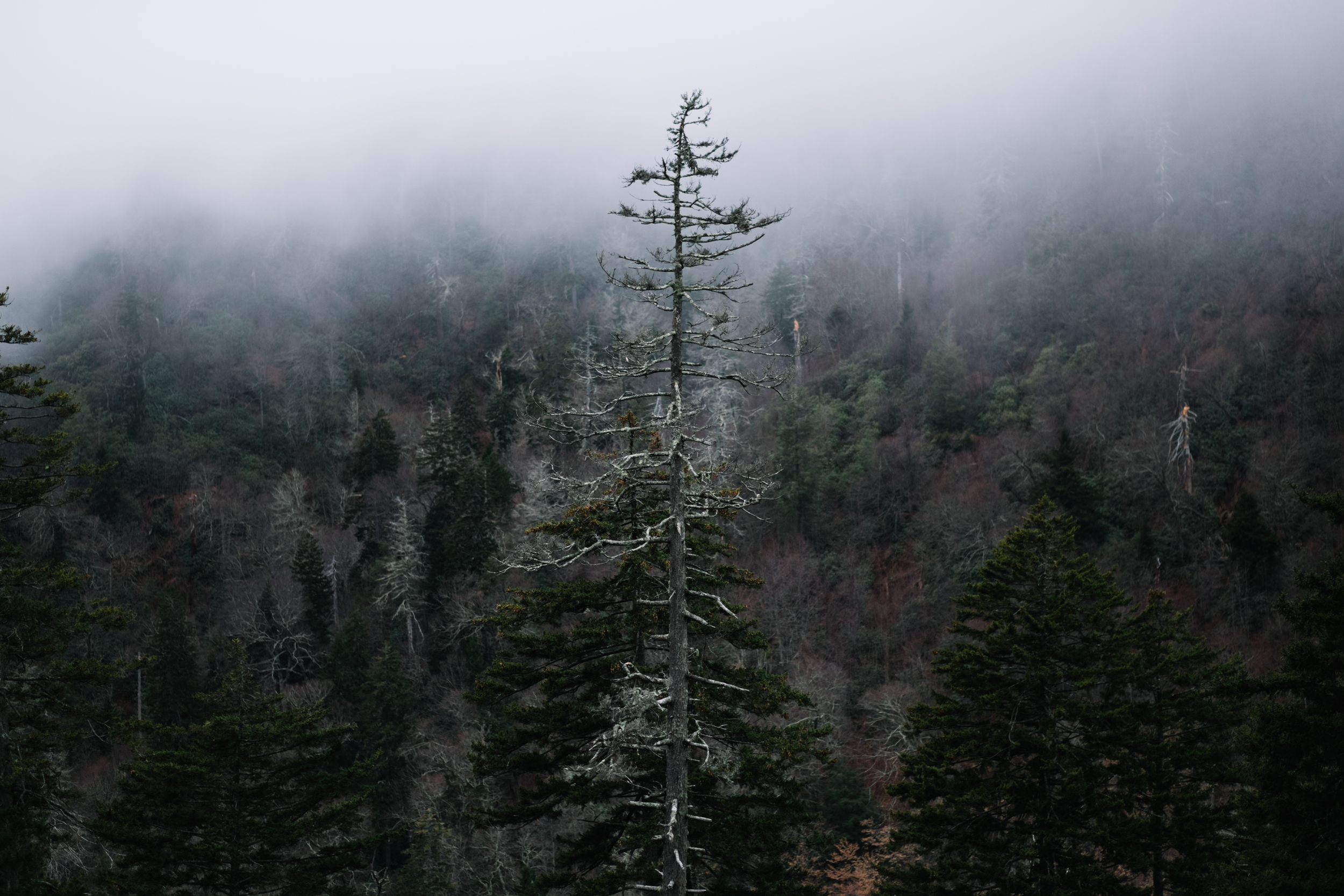 Great Smoky Mountains-0028.jpg