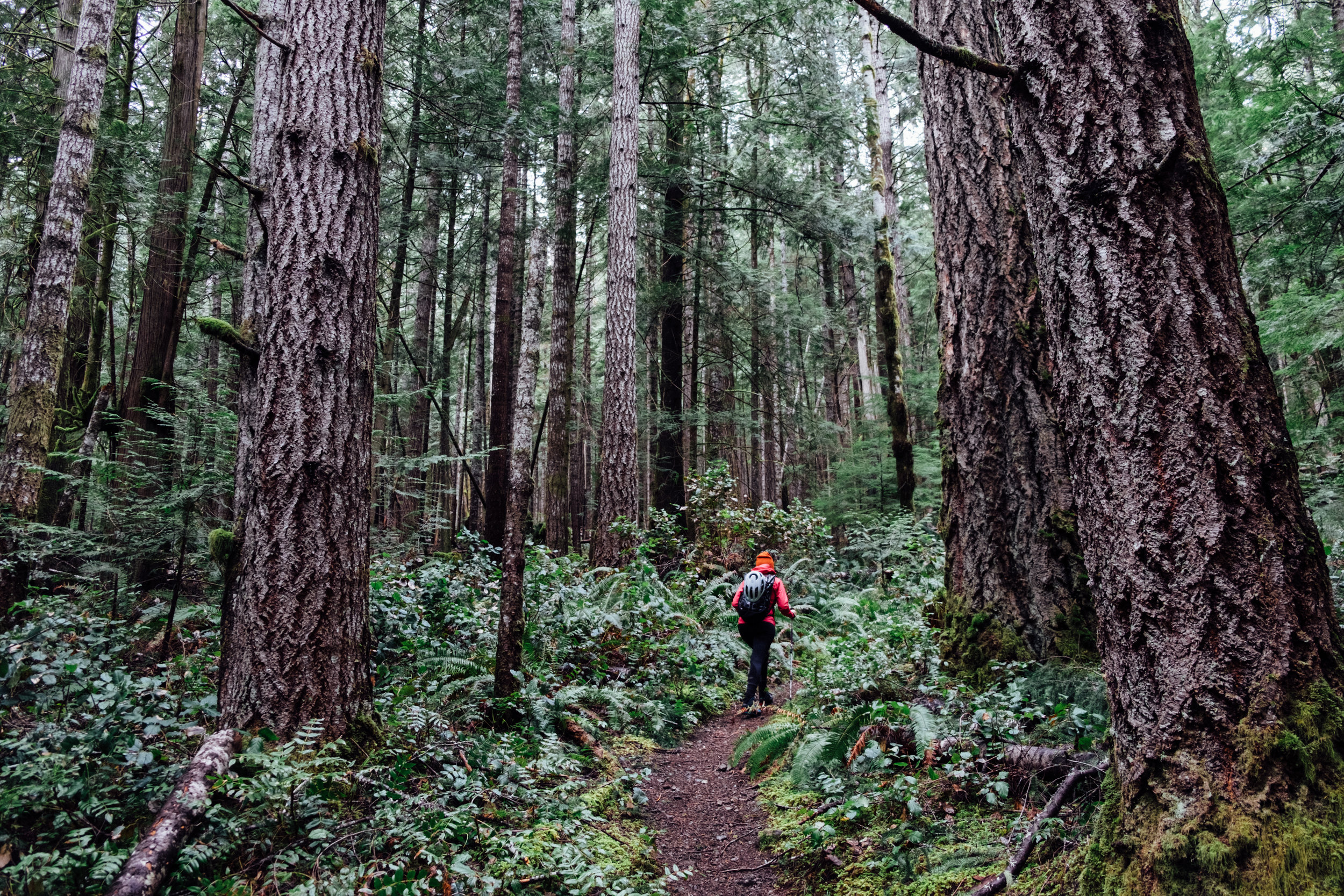 hikingPNW-0014.jpg