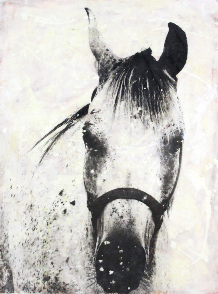 west-tx-horse.jpg