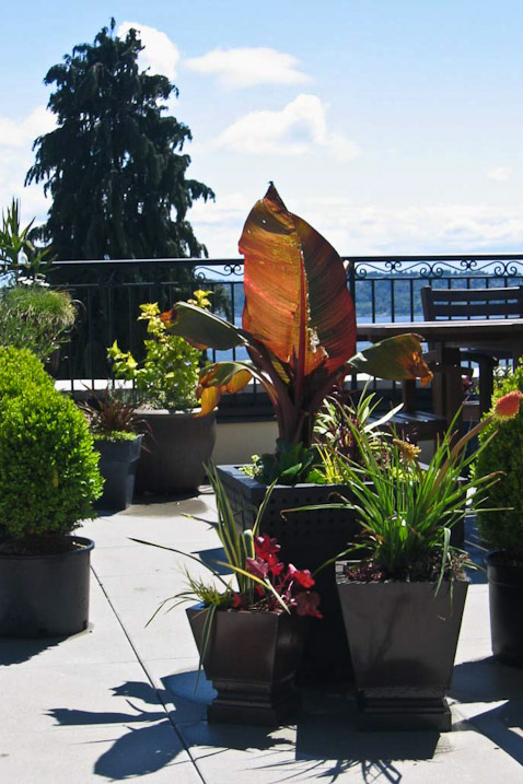queen-anne-landscape-deck-exterior-seattle-paul-moon-design-architecture-2.jpg