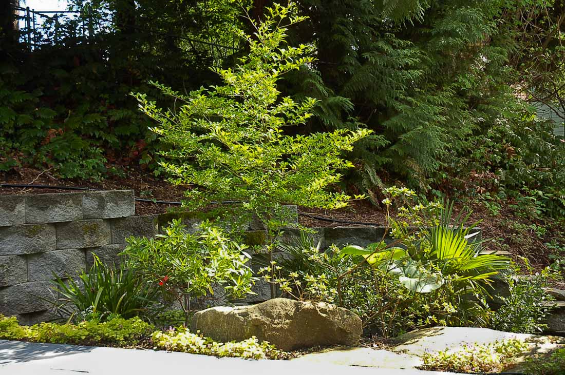 issaquah-back-yard-paul-moon-design-landscape-architecture-3.jpg