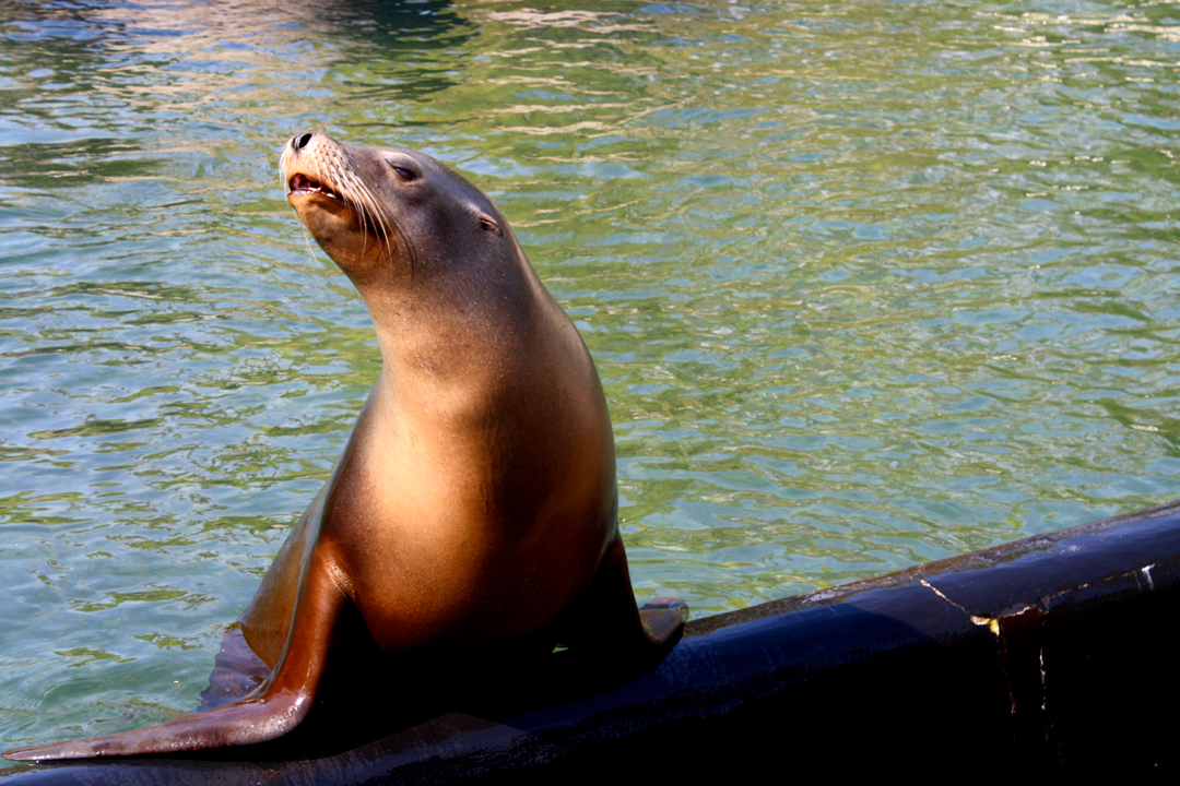 sassy-seal-prospect-park-zoo.jpg