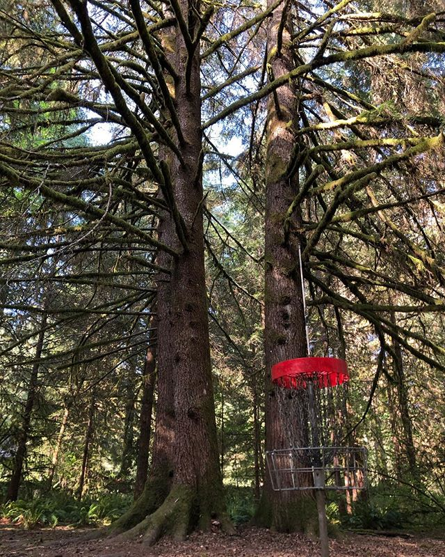 Milo. Everything I expected and more. . . . #discgolf #milomciver #discgolfbasket #bucketlist #thediscgolfpodcast