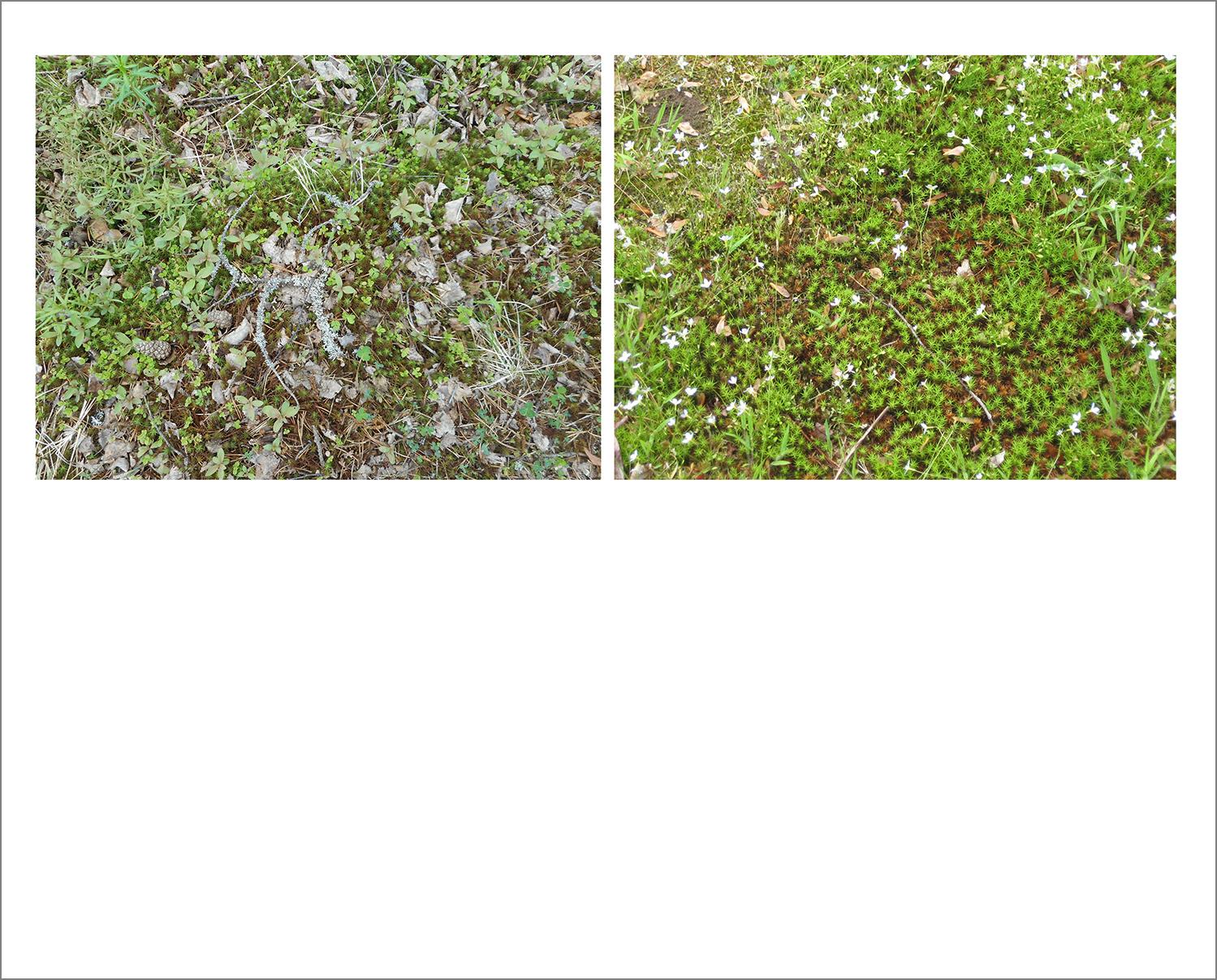 N_Haselbacher_Moss.jpg