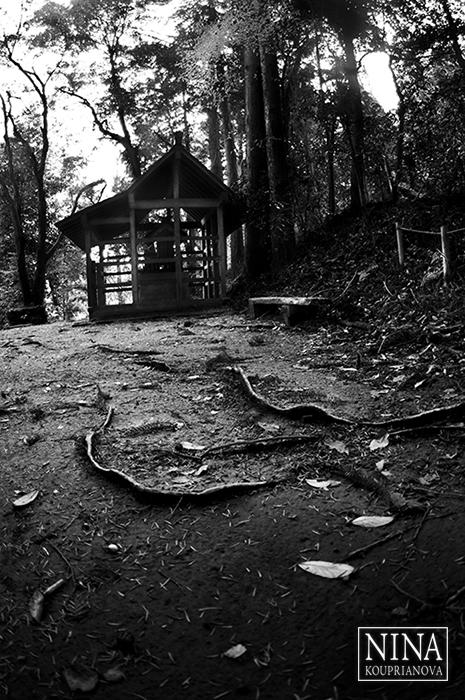Takao-san Forest (Mt. Takao, Japan)
