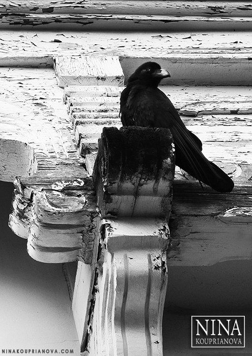 raven hakodate russian consular building vertical bw 700 px with logo.jpg