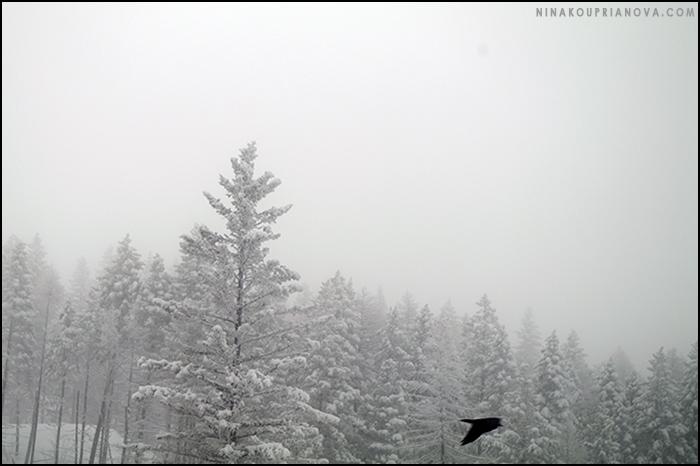 raven 1 700 px with url.jpg