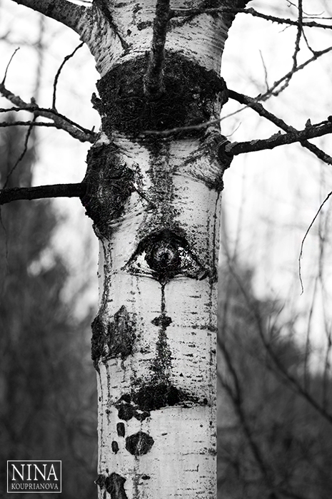 tree with eyes and mouth 700 px with logo.jpg