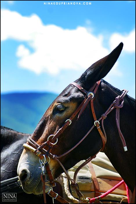 mule with sky 700 px.jpg