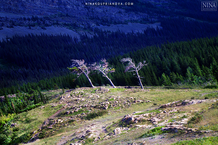 three trees 750 px with url.jpg