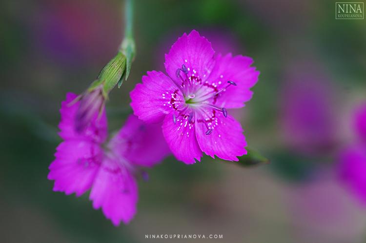 purple garden flowers 750 px.jpg