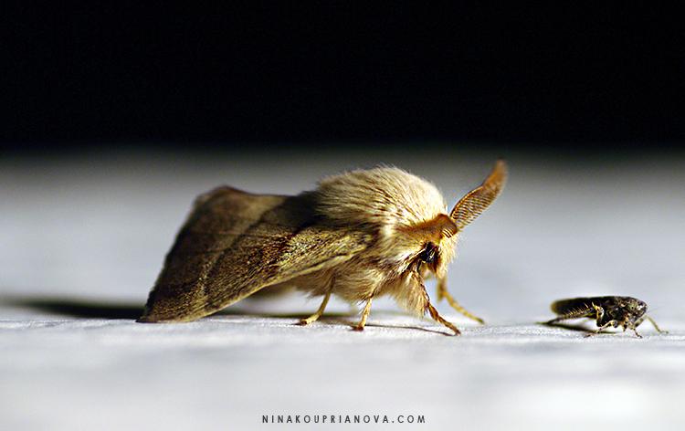 moth 2 cropped v2 750 px with url.jpg