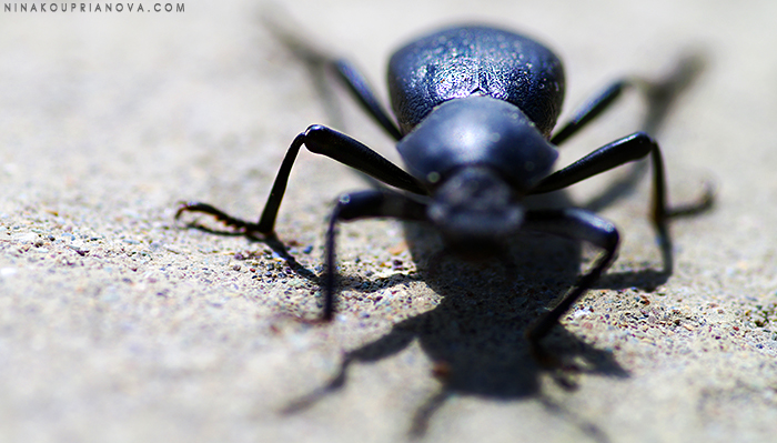 beetle 2 cropped 700 px with url.jpg
