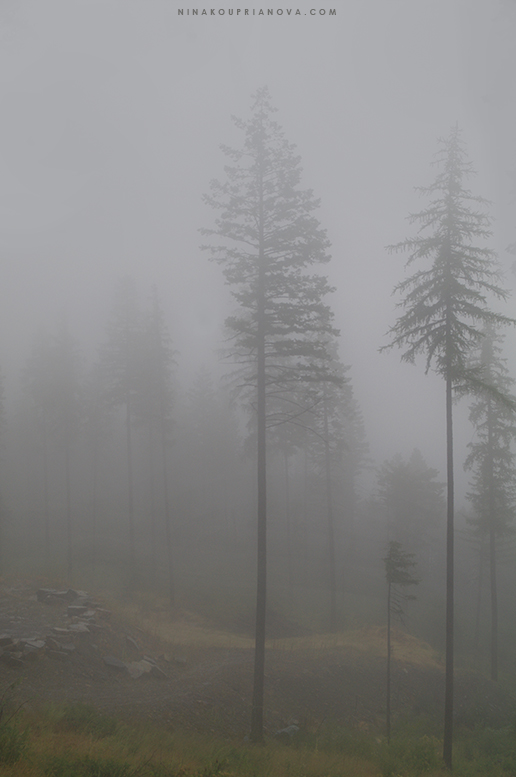 august gray 2 777 px url.jpg