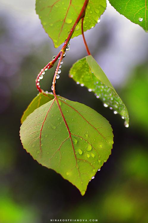 droplets 2 750 px url.jpg